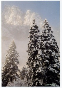 CLOUDS + Yosemite woods - winter crop cprt