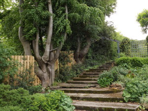 PATHWAY w timbered steps