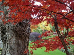fall-leaves-red-prob-maple